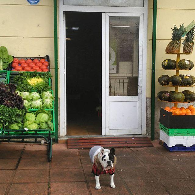 El perro y la tienda